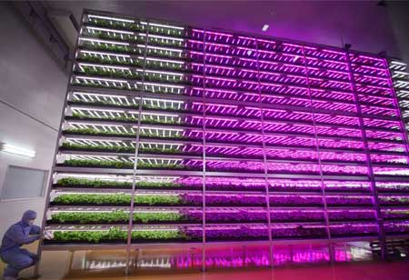 AeroFarms Revolutionizes Farming with IoT